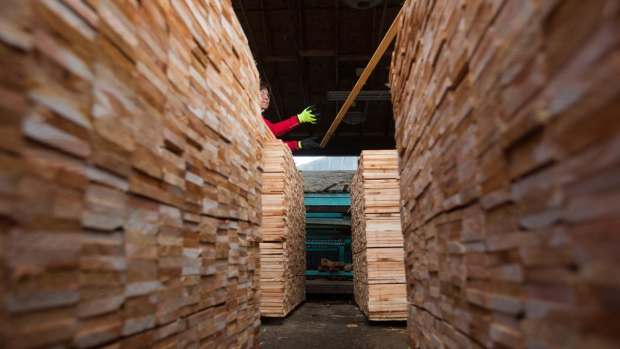 B.C. Liberal Leader Christy Clark tosses a piece of wood on a stack at CedarLine Industries in Surrey, B.C., on April 24, 2017. (Darryl Dyck / THE CANADIAN PRESS)