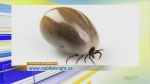 Protect your pets from Ticks!