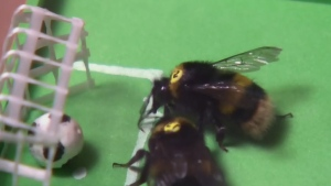 soccer for bees
