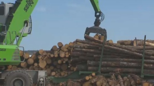 The United States is nailing Canada's lumber industry with hefty tariffs that will cost Canadians jobs and Americans money.