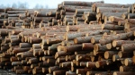 Logs are stacked at Murray Brothers Lumber Company woodlot in Madawaska, Ontario on Tuesday April 25, 2017. CANADIAN PRESS/Sean Kilpatrick