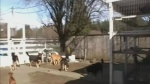 Sanctuary for unwanted animals needs help