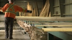 CTV Ottawa: Bracing for lumber tariff