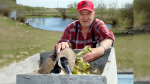 Goose returns to man's yard every spring