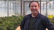CTV London: Strawberry science