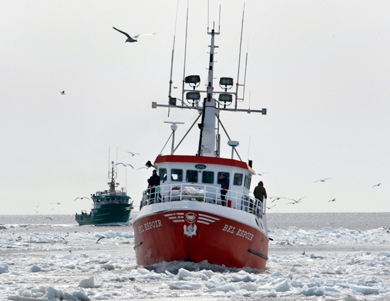 Seal hunters bring their boats back to the harbour at Cap-aux-Meule in Iles-de-la-Madeleine, Que., Monday, March 31, 2008. (Ryan Remiorz /  THE CANADIAN PRESS)