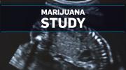 Study links marijuana to low birth weight babies