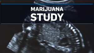 Study links marijuana to low birth weight babies