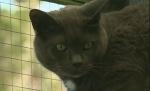 Potentially deadly cat virus spreading in Nanaimo