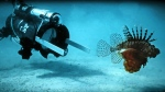 The first day a new robot was used to hunt dangerous and invasive lionfish in Bermuda is pictured on April 18, 2017.  (Dr. Philippe Rouja / Robots in Service of the Environment)