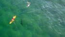 Surfers have no idea there's a shark lurking right