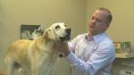 pets, lyme disease