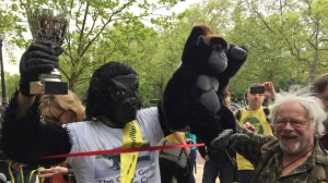 Metropolitan Police officer Tom Harrison, known as Mister Gorilla, is congratulated by activist and comedian Bill Oddie, right, after crawling across the London Marathon finish line in The Mall, London, Saturday April 29, 2017. (Nina Massey/PA via AP)