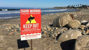 In this Sunday, April 30, 2017 photo, a sign warns beach goers at San Onofre State Beach after a woman was attacked by a shark in the area Saturday, along the Camp Pendleton Marine base in San Diego County, Calif.  (Laylan Connelly/The Orange County Register via AP)