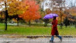 A women makes her way through the wet, rainy weather in Toronto. (Nathan Denette/The Canadian Press)