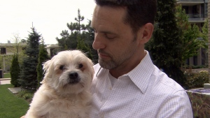 Dog kicked in Burnaby