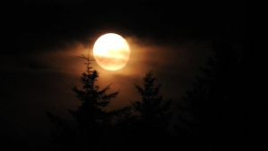Owen Cameron shared this lovely photo of last May's Full Moon over Green Point NS