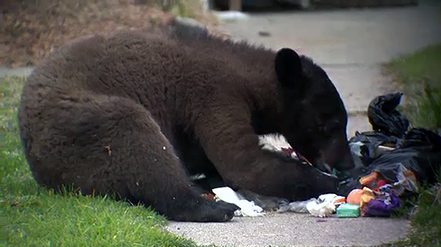 Experts warn people to avoid leaving out smelly garbage.