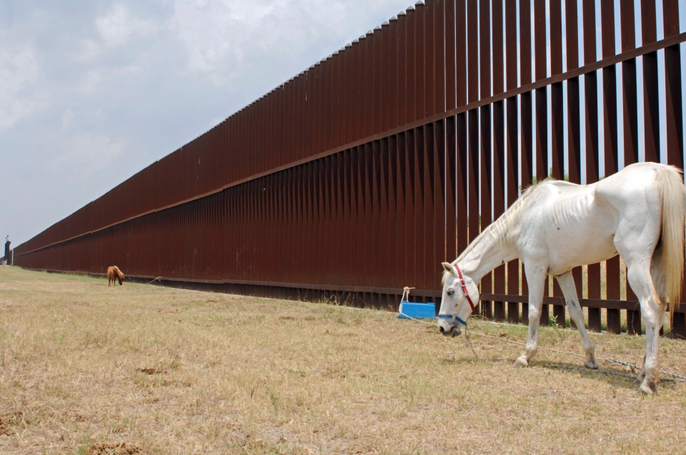 A horse grazes the land along the U.S. Border Fence Friday, May 12, 2017, on Oklahoma Avenue in Brownsville, Texas. (Miguel Roberts / The Brownsville Herald via AP)