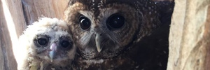In pictures - owl cam