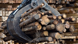 Workers pile logs at a softwood lumber sawmill Friday, Nov. 14, 2008 in Saguenay, Que. (THE CANADIAN PRESS/Jacques Boissinot)