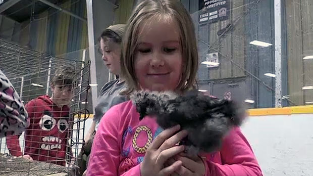 Young students had the chance to interact with chickens.