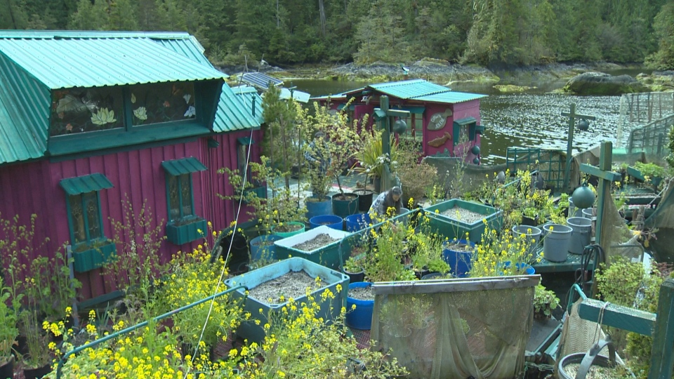 A man-made floating island near Tofino, B.C. has attracted worldwide attention for its unique design and off-the-grid allure. (CTV Vancouver Island)