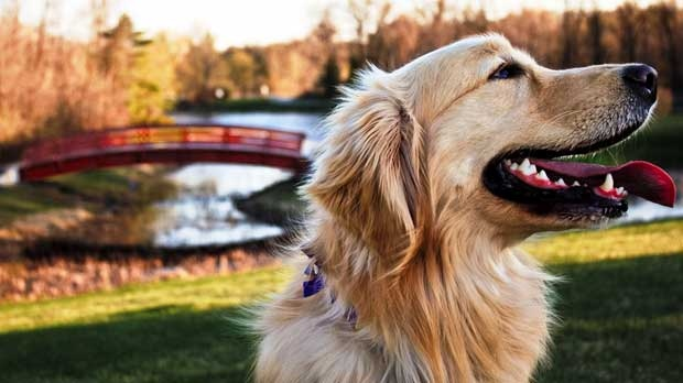 Marley having  a fun time at Kings Park. Photo by Brady Corps.