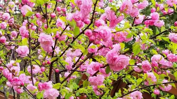 Amazing Spring Blooms. Photo by Valerie Martinuson.