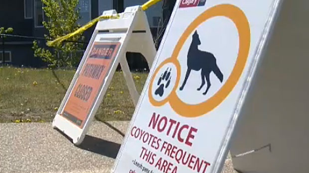 City officials are warning residents about the dangers posed by coyotes in Calgary park and pathway areas.