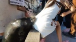 Sea lion snatches little girl