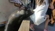 Sea lion pulls girl off dock in Richmond