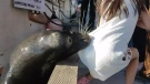 This screengrab from a  video shot by Michael Fujiwara shows the sea lion grabbing the little girl as she sits on the edge of the dock. (Michael Fujiwara)