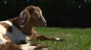 Blind animals bond at Central Alberta farm