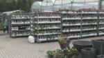 Wary gardeners