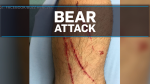 Couple goes 'on the attack' during bear encounter