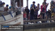 Days after a sea lion pulled a girl into the water in Steveston, B.C., crowds are flocking to the pier to catch a glimpse of the animal.