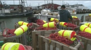 Lobster traps damaged
