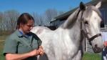 West Nile virus vaccination for horses