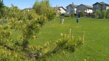 West Edmonton dog attack