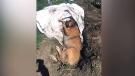 Dog found buried alive