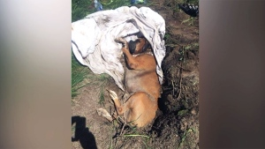 Dog found buried alive