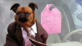 Dressed up dog hawks used cars on YouTube