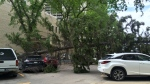A tree fell and landed on a vehicle near the Spadina Towers on Wednesday May 24, 2017.