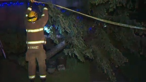 High winds in Calgary knocked over a good many trees and power lines, knocking out electricity for about 10,000 customers.