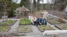 Stephen Trickett, Chris Langmead and Jack Bishop pose with tulip stalks in this recent handout photo. (Memorial University of Newfoundland Botanical Garden / THE CANADIAN PRESS)