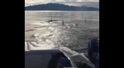 orcas sunshine coast