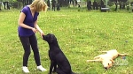 See where service dogs are trained