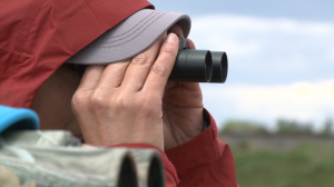 Bird watchers flock to Reed Lake