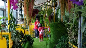 "A passenger takes photos among live vegetation inside the ""forest bus"" in Taipei. (Sam Yeh/AFP)"